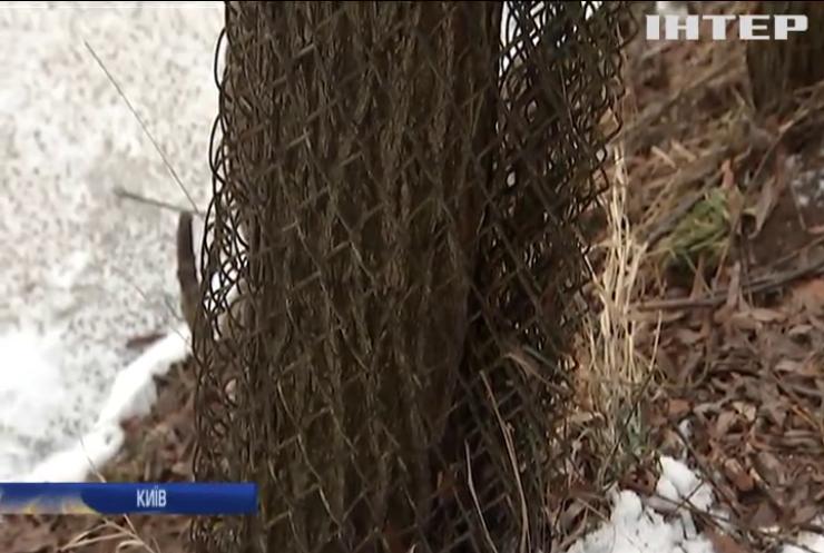 В Києві бобри обрали для життя Позянки