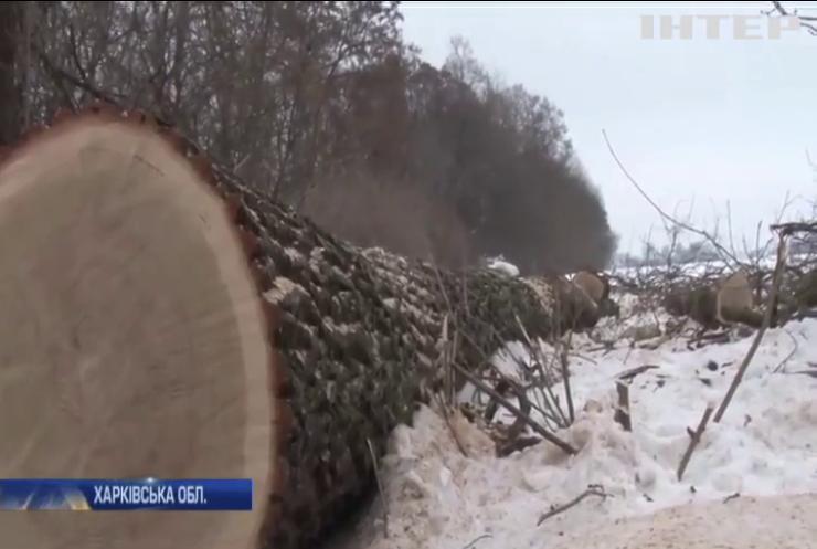 На Харківщинібраконьєри незаконно вирубують лісосмуги