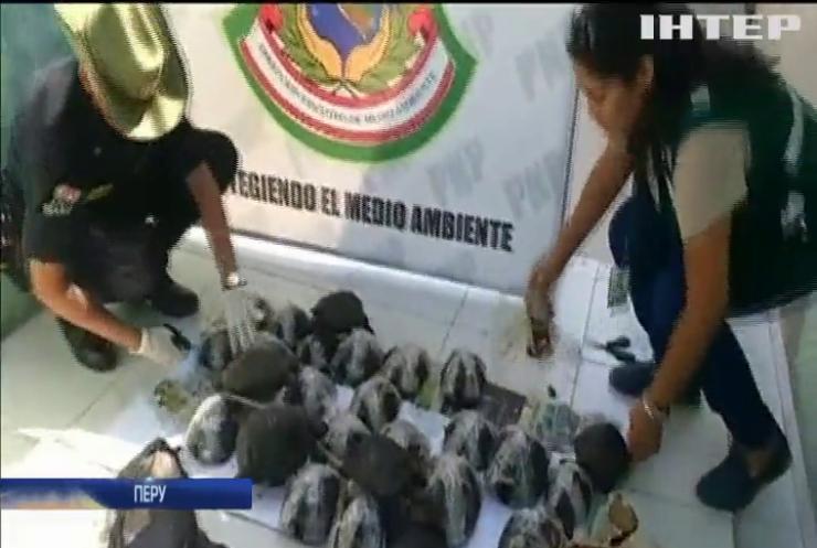 У Перу активісти врятували рідкісних слонових черепах