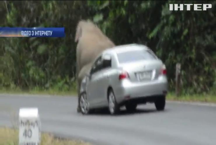 У Таїланді слони почали полювати на автомобілі