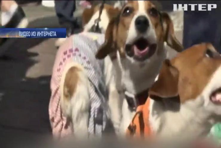 В Киеве прошел парад собак породы джек-рассел