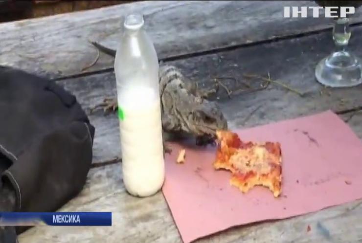 Ігуана вкрала у туриста шматок піци (відео)