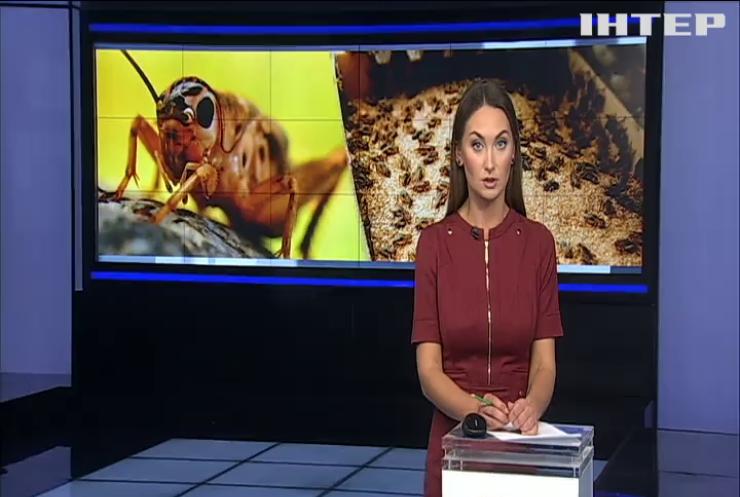 У Бельгії на фермі вирощують їстівних цвіркунів
