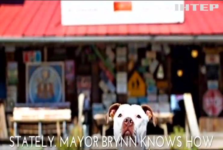 В США мэром города стал пес