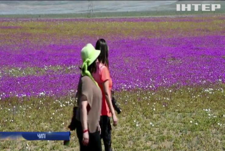 У Чилі зацвіла найпосушливіша пустеля в світі (відео)