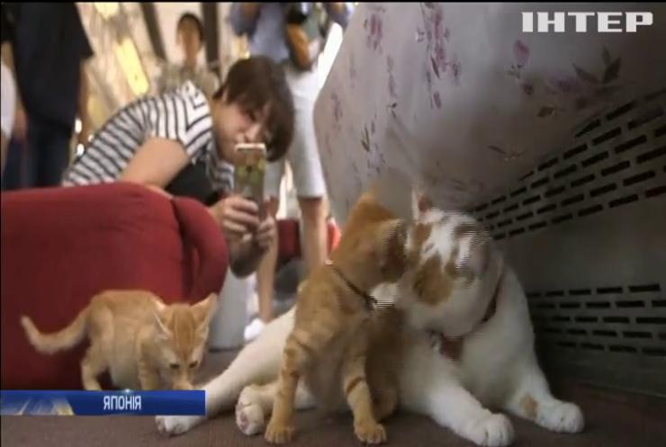 У Японії запустили потяг з котами