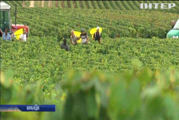 Винороби Франції втратили до 80% врожаю
