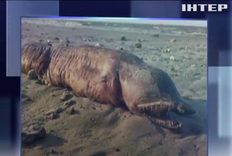 """Ураган """"Гарві"""" виніс на пляж загадкову істоту"""