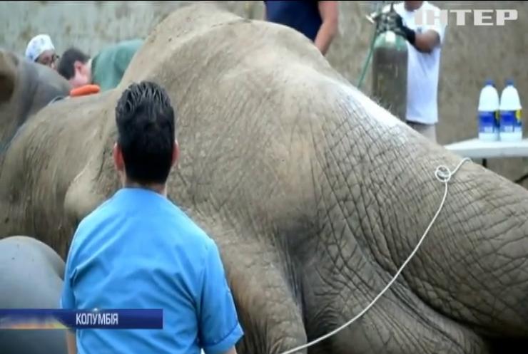 У Колумбії зробили операцію слону