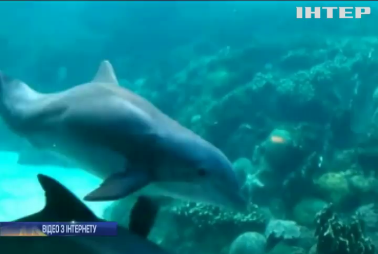 Вчені зафільмували залицяння дельфінів (відео)