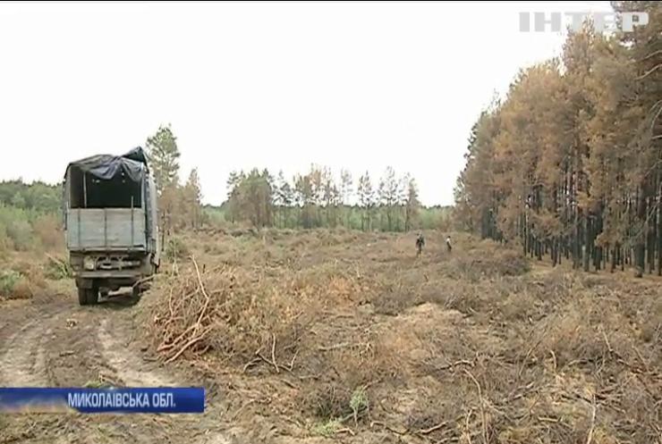 В Миколаєві браконьєри масово ріжуть ялинки до Нового року