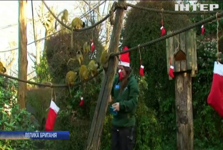 Мешканці Лондонського зоопарку отримали різдвяні подарунки (відео)