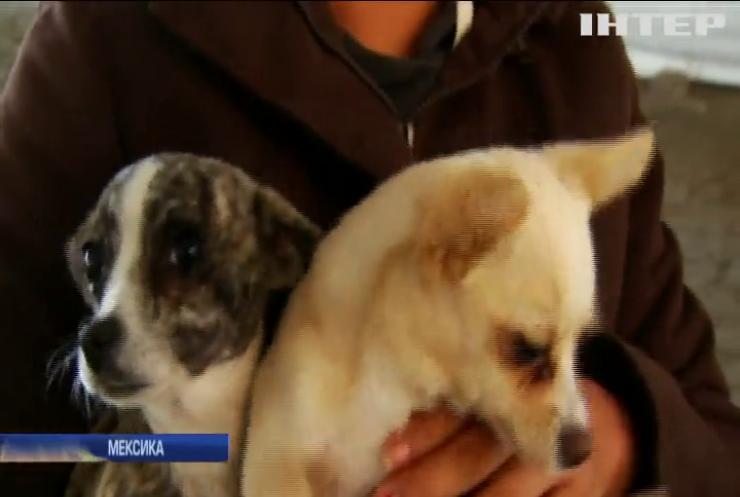 В Мехіко священики благословили тварин