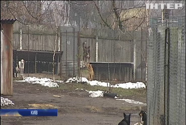 Собача справа: чому на вулицях більшає безпритульних тварин