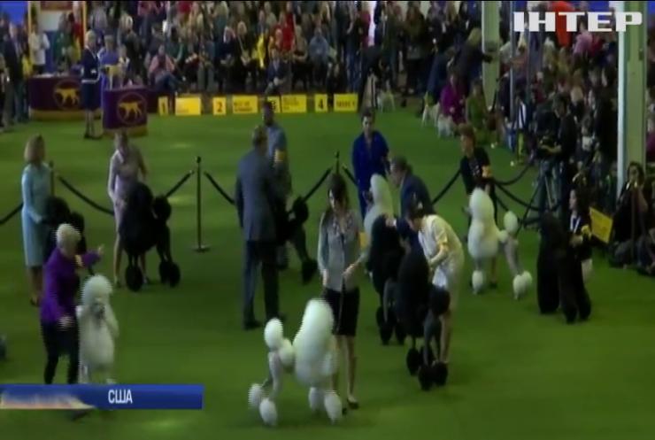 У США влаштували собачі Олімпійські ігри