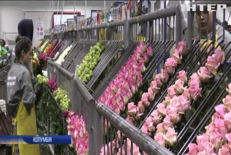 В Колумбії сотні гастарбайтерів з Венесуели пакують троянди