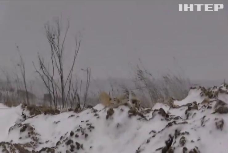 Війна на Донбасі: бойовики 15 разів порушували режим тиші