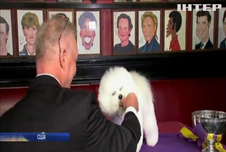 В Нью-Йорку обрали найкращого собаку в світі