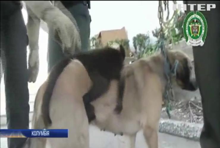 """У Колумбії собака """"всиновила"""" мавпеня (відео)"""