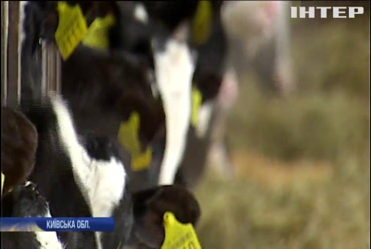 Мороз в Україні: агрономи заявили про безпеку врожаю