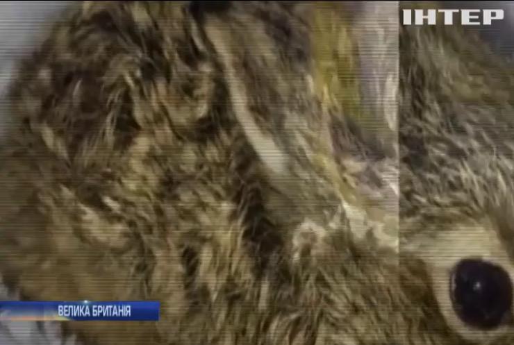 На злітній смузі аеропорту Дубліна знайшли замерзле зайченя