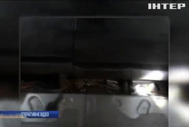 Контрабандисти намагалися доправити медикаменти луганським бойовикам (відео)