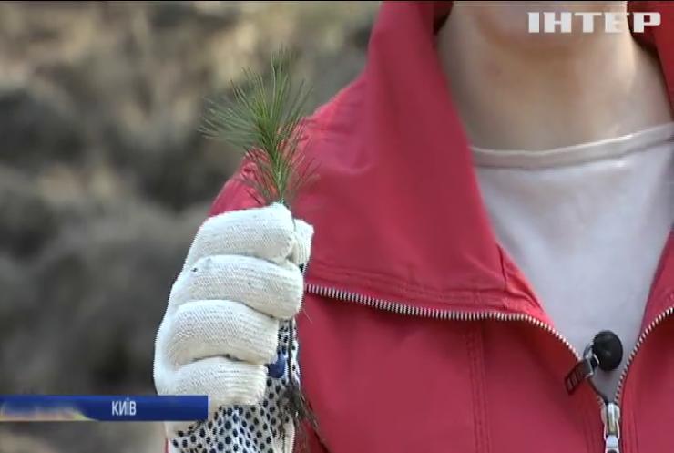 Під Києвом активісти висадили тисячі дерев (відео)