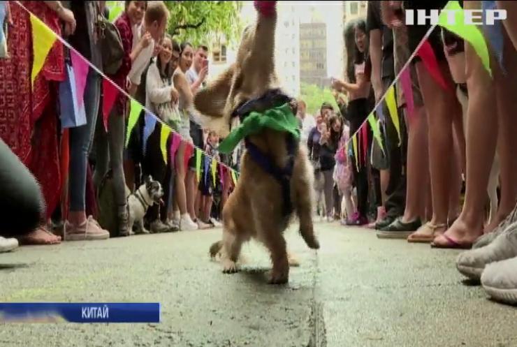 У Гонконзі влаштували забіг собак