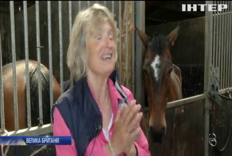 Любов з першого погляду: чим коні вразили британських вчених