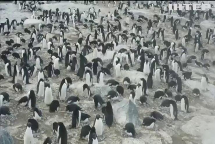 Як в Антарктиці вивчають життя пінгвінів (відео)