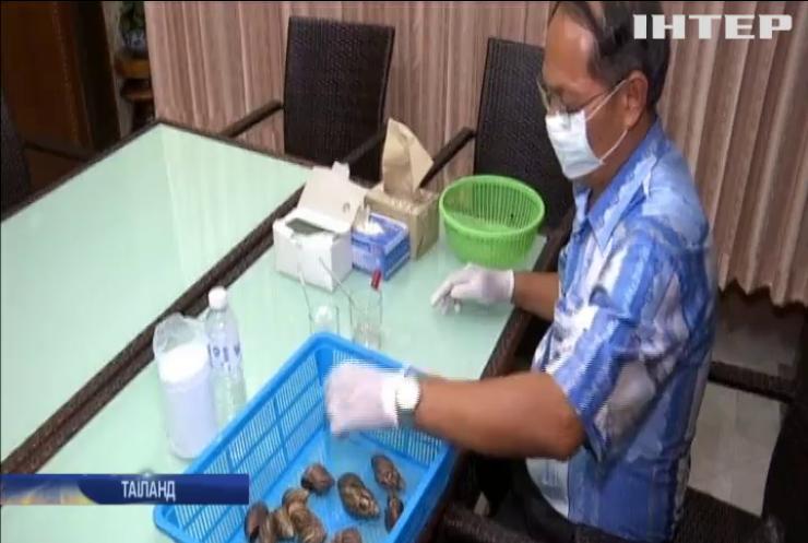 Унікальний бізнес: як таїландські фермери заробляють на равликах