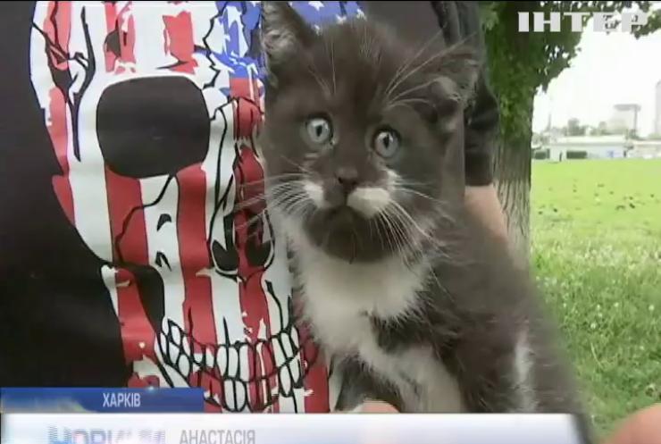 Харківські волонтери знайшли в лісі пакунки з десятками кошенят