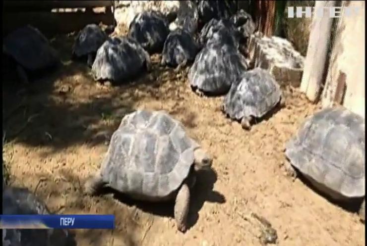 Галапагоських черепах повернуть до дому
