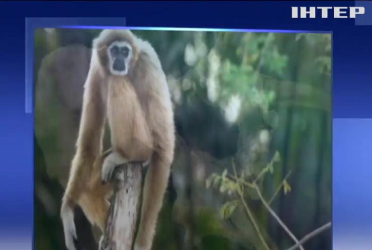 В Китае нашли останки неизвестного вида обезьян