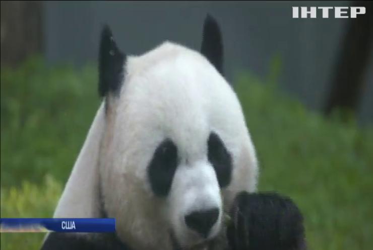 У Вашингтоні працівники зоопарку чекають на поповнення (відео)