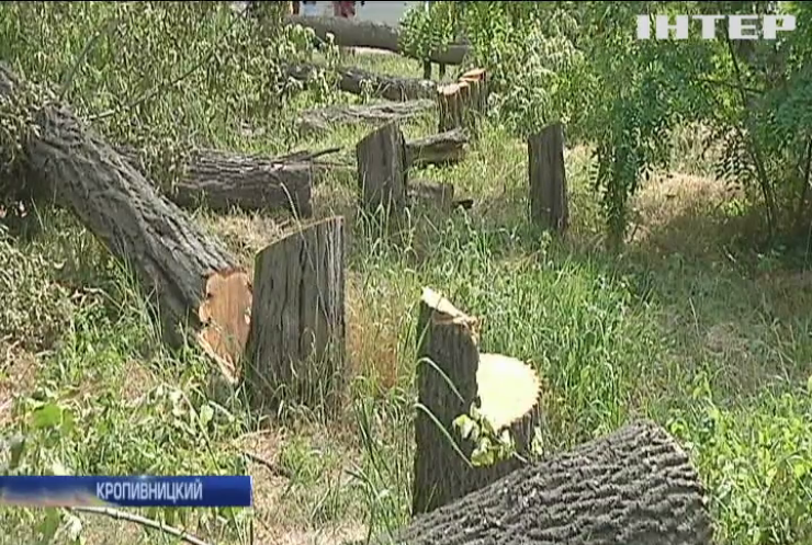 Скандал в Кропивницком: в городе идет вырезка здоровых деревьев