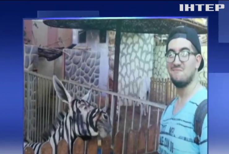 Зоопарк перетворив ослів на зебр