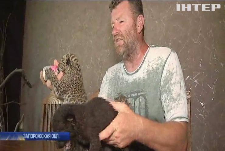 Зоопарк под Запорожьем пополнился детенышами леопарда