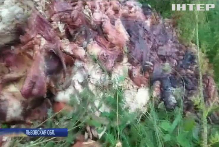 Во Львовской области обочину трассы завалили останками животных