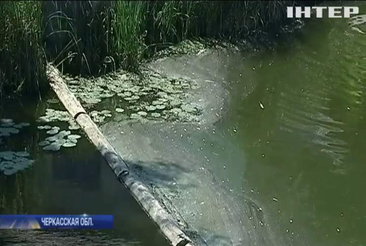 В Черкасской области берега реки усеяны мертвой рыбой