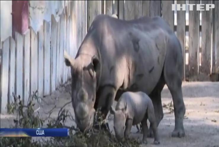 У зоопарку Клівленда показали дитинча рідкісного чорного носорога