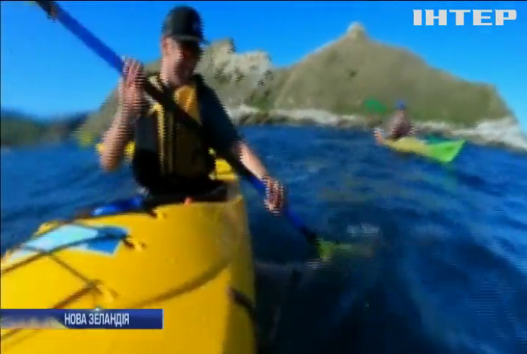У Новій Зеландії тюлень атакував каное (відео)