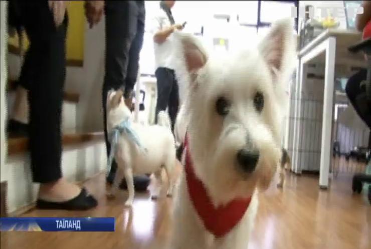 Собачки розважають робітників у Таїланді