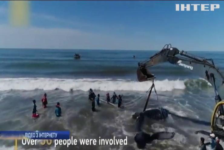 Аргентинці врятували кита від смерті