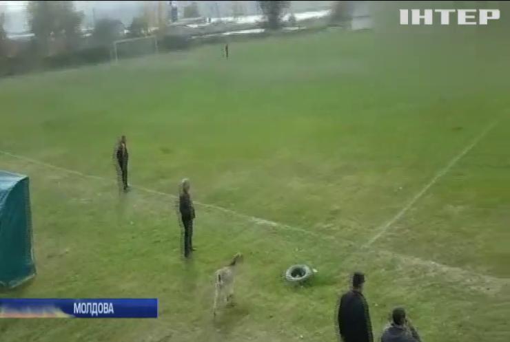 У Молдові на футбольному чемпіонаті коза допомогла забити гол (відео)