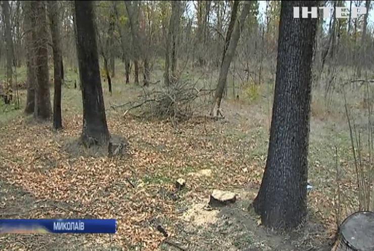 Екологічний вандалізм: хто знищує ліс на околицях Миколаєва?
