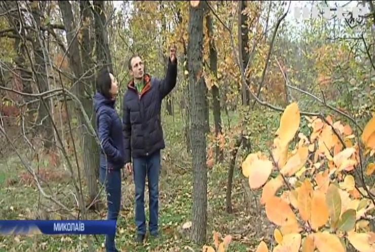 Екологічний вандалізм: хто знищує ліс під Миколаєвом?