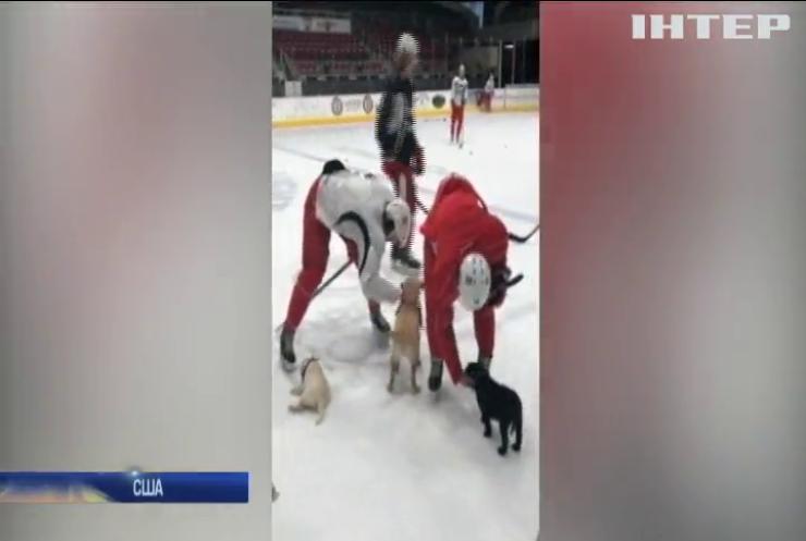 Собаки готують хокеїстів до вирішальних матчів (відео)
