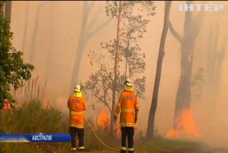 Австралію охопили лісові пожежі