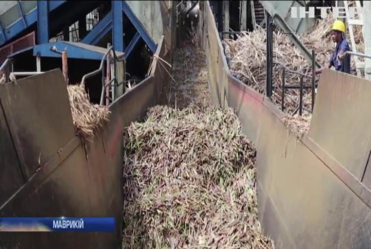 Електроенергію навчилися добувати із цукрової тростини